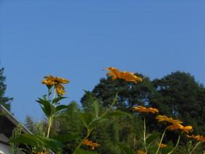 青い空 黄色い花